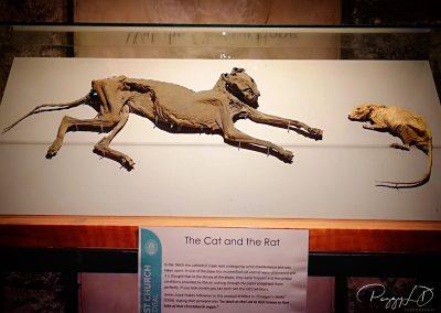 Le Chat et le rat momifiés